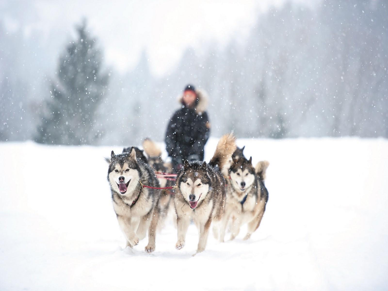 Activités incentive séminaire Savoie mont blanc