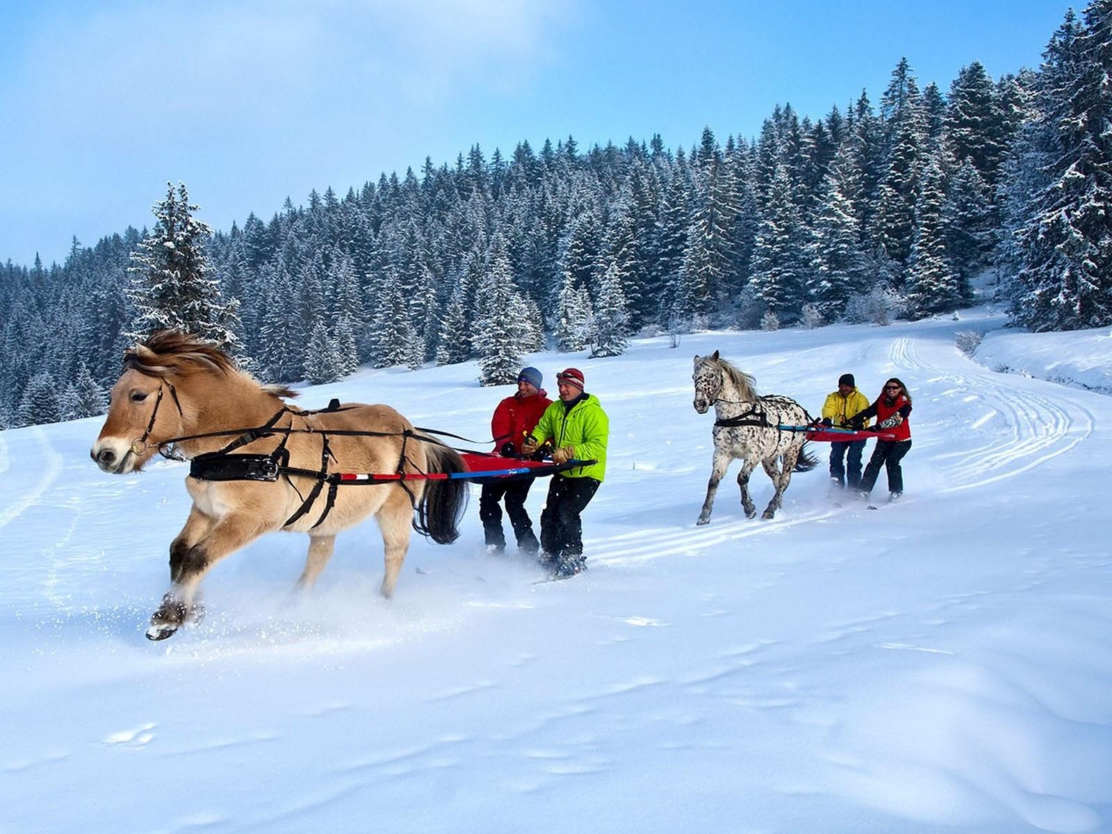 activité ski joering séminaire au grand bornand