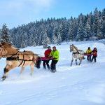 Activité Ski Joëring pour votre séminaire d'hiver dans les Alpes
